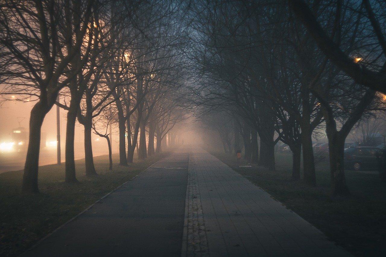 city, walkway, trees